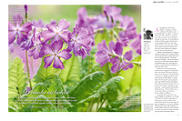 Gardens Illustrated April 2017